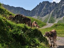 erholsamer Urlaub in Österreich