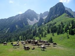 Familienhotels für den Familienurlaub in Tirol
